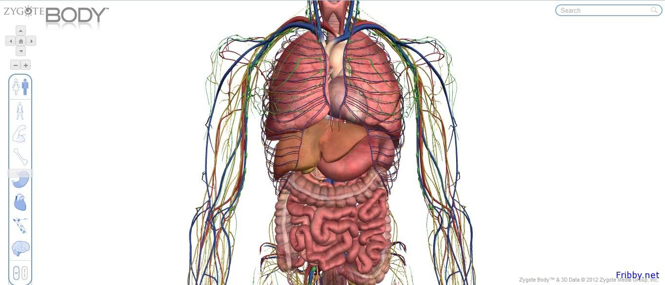 Zygoye Body Google Body Il Corpo Umano In 3d Fribby Net